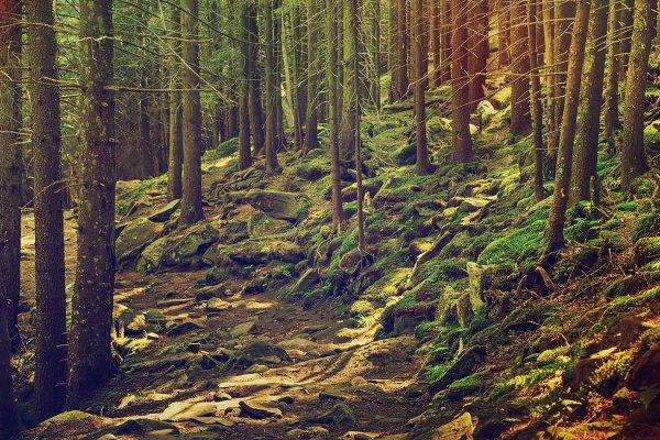 Dense green forest