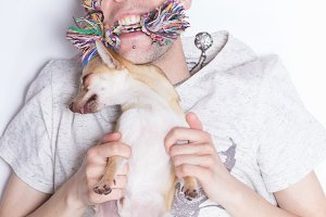 chihuahua dog playing boy man