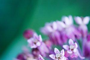 Small Purple Flowers, portrait