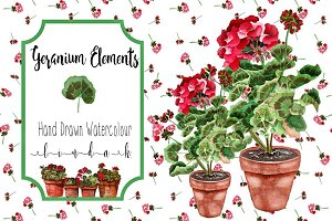 Geraniums Watercolour