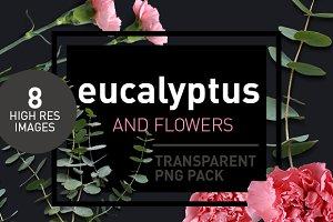 Eucalyptus - Transparent Pngs