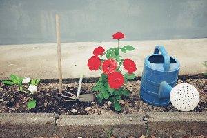 Little garden with gardening tools