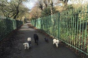 Dogs Walking Down Path