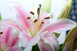 lily flowers frame copyspace