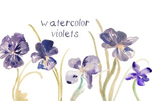 Watercolor Violet Illustrations