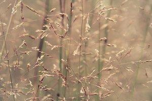 Botanical life2