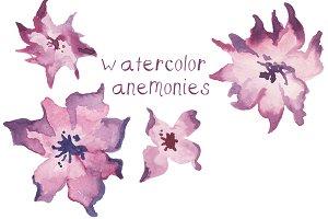 Watercolor Anemonies Clip Art