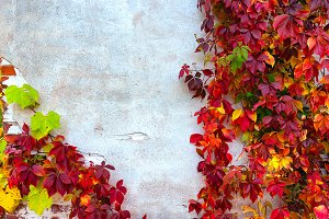 Wall. Autumn