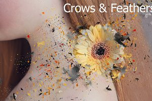 Crows & Feathers Shatter Action