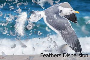 Feathers Dispersion Action