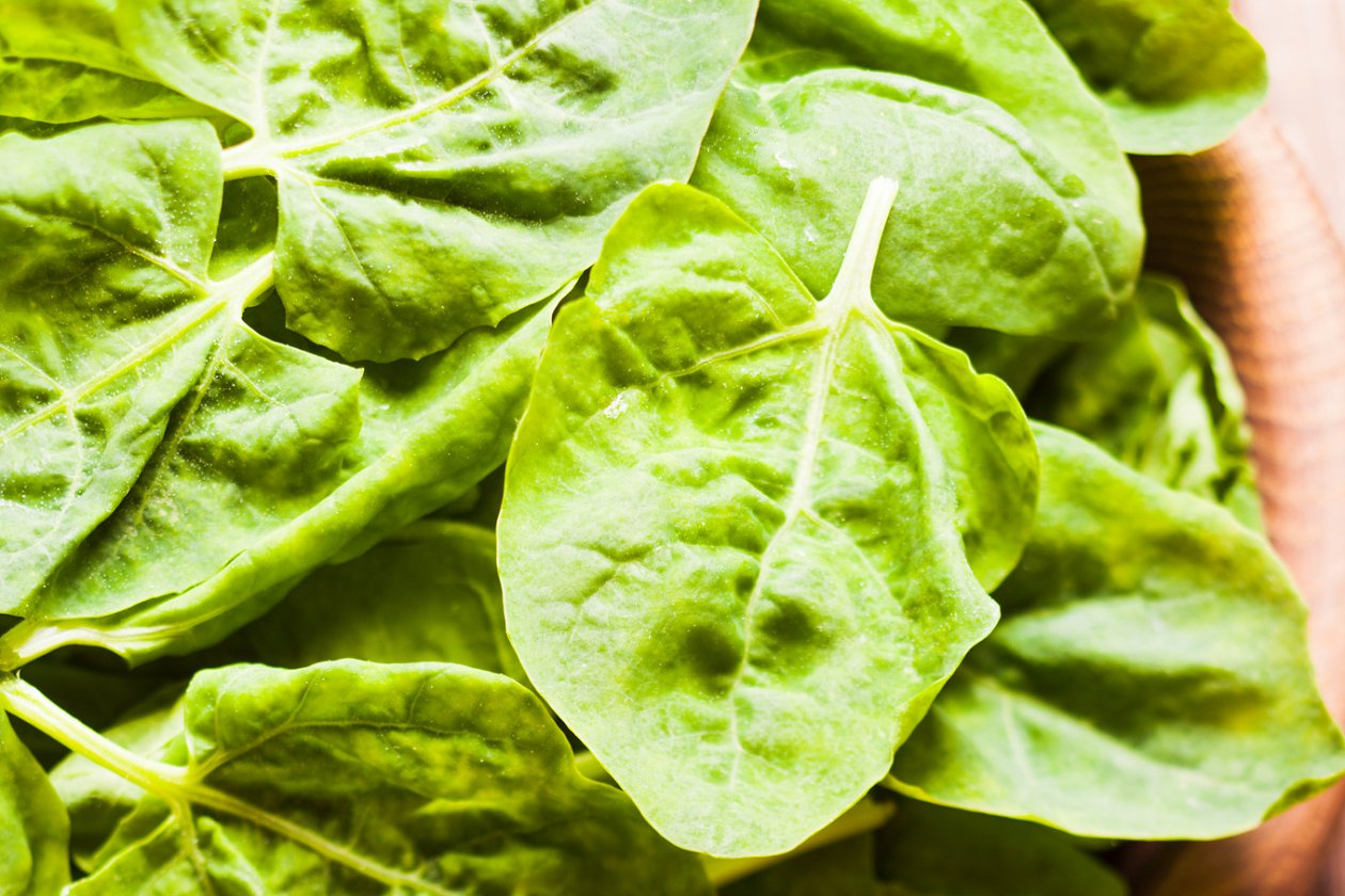 photosynthesis in spinach leaves The pigments chlorophyll a and b, caratoene, and xanophyll play a role in photosynthesis in spinach leaves prediction for spinach photosynthesis if chlorophyll a and b, carotene, and xanophyll play a role in photosynthesis in spinach leaves, then the wavelengths which they absorb will also be the wavelengths at which photosynthesis occurs.