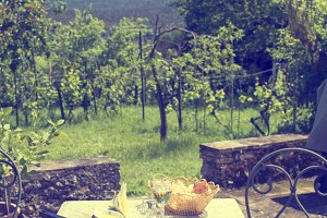 Summertime lunch in the vineyard