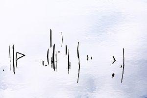 Broken reed in the water