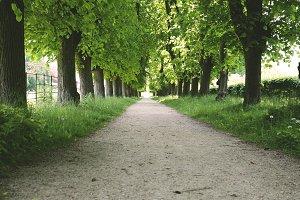 Dutch Country Lane
