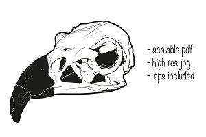 Vulture skull illustration