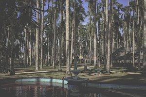 Palm garden, Paramaribo, Suriname