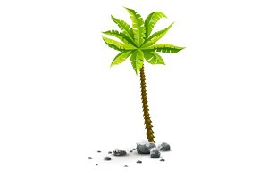 Isolated tropical coconut palm tree with green leaves