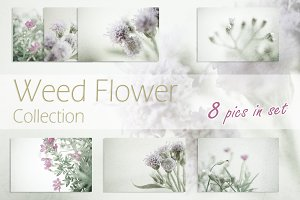 weed flower background