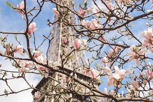 Eiffel Tower Flowers - Paris, France