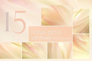 Lotus Petal ,soft flower background
