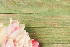 Tulips on green wooden background