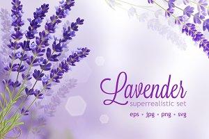Lavender flower realistic set