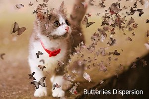 Butterflies Dispersion Ps Action