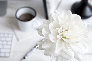 White Floral Desktop Stock Image