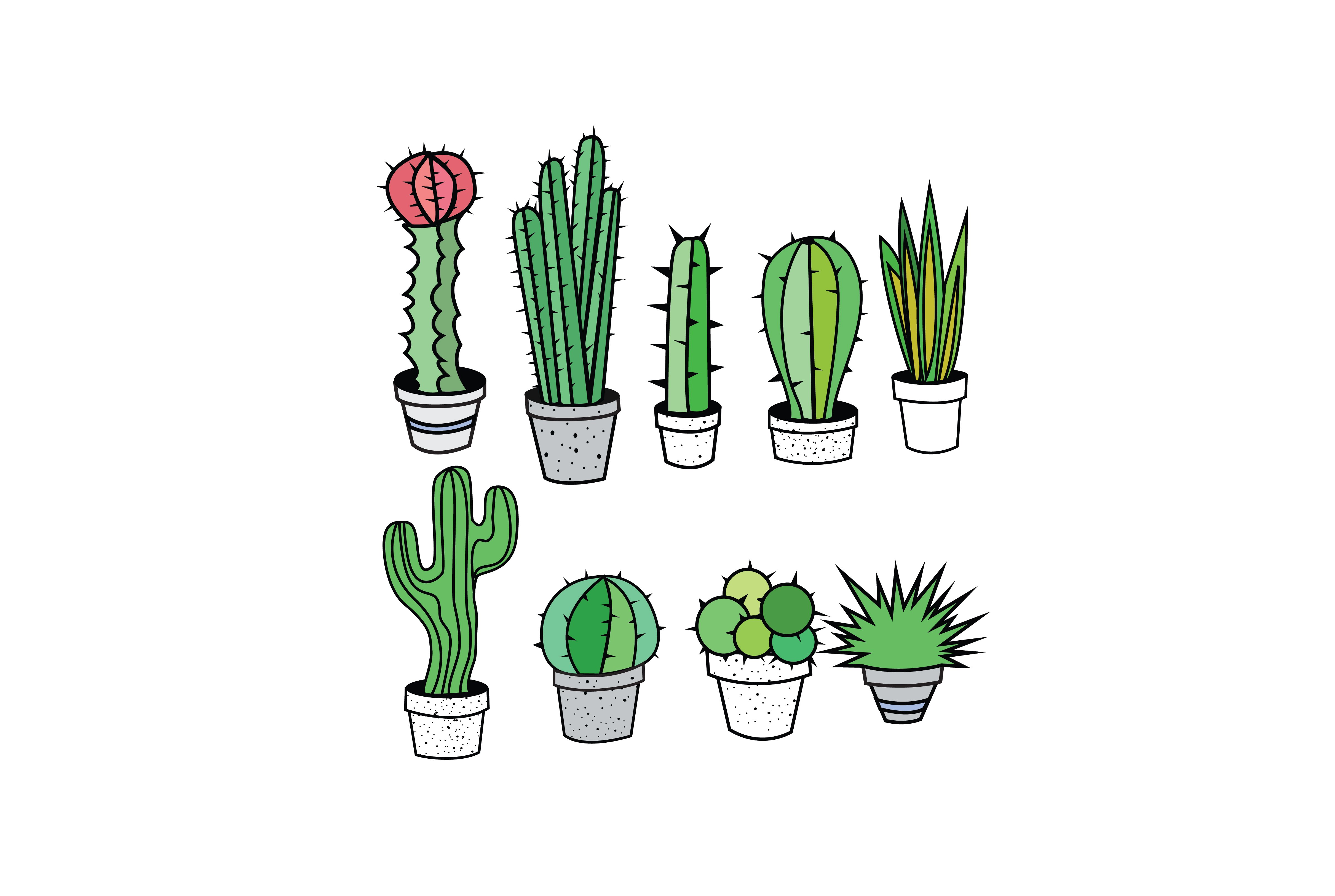 Cactus succulent. And succulents clipart