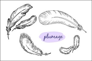 Plumage. Hand drawn graphic
