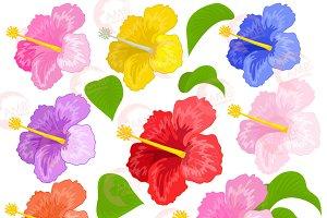 Hibiscus Clipart Florals 1042