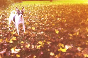 Dog In Autumn Yard