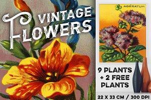 VINTAGE FLOWERS, PACK 1, + 2 BONUS