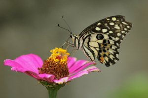 Butterfly perched on a flower.