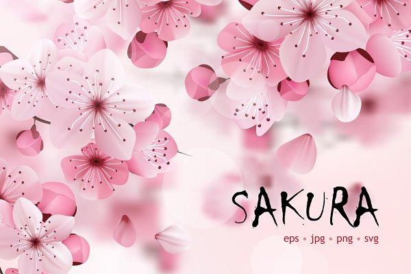 Sakura flower vector set