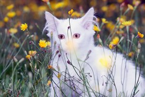 cute white fluffy cat