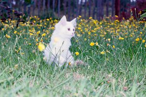 fluffy cat on the meadow