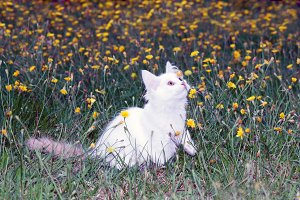 cat playing on the meadow