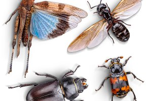 Wild animal insect