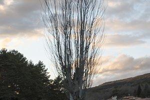 Tree along the River Duero