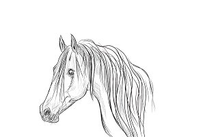 head of horse, sketch style