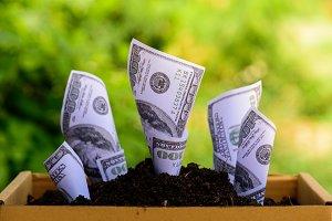 Business money concept