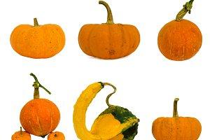 Fancy yellow Big pumpkin
