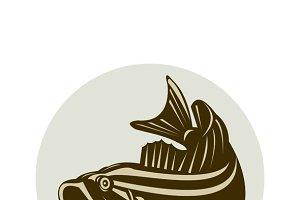 Largemouth Bass Jumping