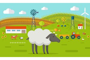 Sheep on Farmyard