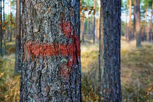 Red arrow. Forest
