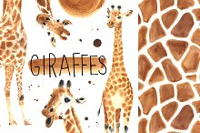 Watercolor giraffes