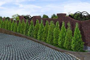 Tree line alley, 3d render