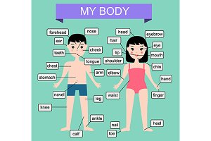 My body. Educational infographic