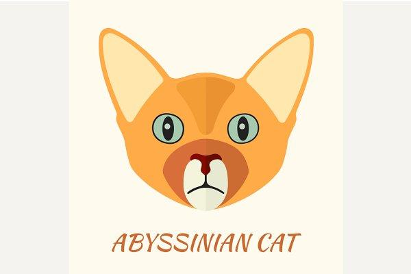 Abyssinian purebred cat